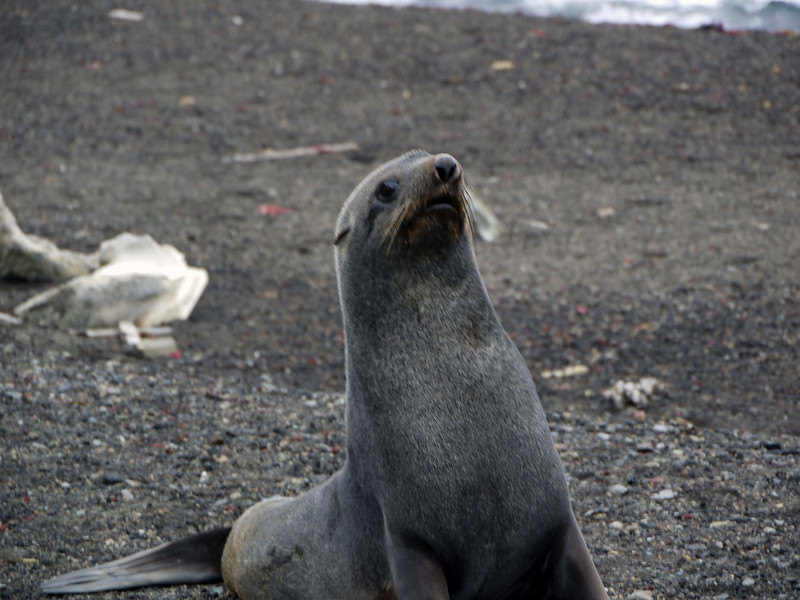 1631 - Deception Island - 2011-02-23 - P1070373