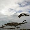 0563 - Neko Harbour - 2011-02-20 - P1060091