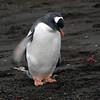 1673 - Deception Island - 2011-02-23 - P1070441