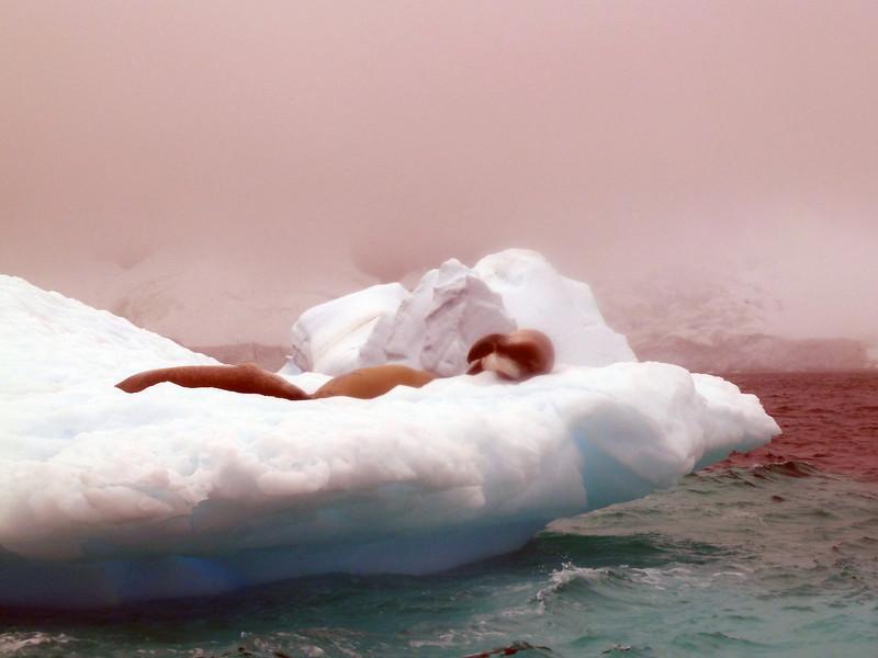 1449 - Penola Strait-Booth Island - 2011-02-22 - P1010777