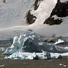 0590 - Neko Harbour - 2011-02-20 - P1060118