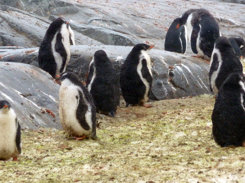 1402 - Petermann Island - 2011-02-22 - P1010722