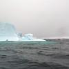 1446 - Penola Strait-Booth Island - 2011-02-22 - P1010774