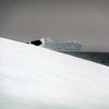 1467 - Penola Strait-Booth Island - 2011-02-22 - P1010803