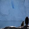 0488 - Neko Harbour - 2011-02-20 - P1060002