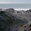 0203 - Half Moon Island - 2011-02-19 - P1010629