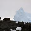 1333 - Detaille Island - 2011-02-21 - P1070064