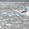 0409 - Neko Harbour - 2011-02-20 - P1050901