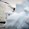 1368 - Detaille Island - 2011-02-21 - P1070122