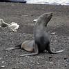 1635 - Deception Island - 2011-02-23 - P1070390