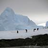 1315 - Detaille Island - 2011-02-21 - P1070025