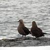 1270 - Detaille Island - 2011-02-21 - P1060956