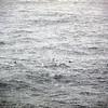 0326 - At Sea - 2011-02-19 - P1050804