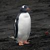 1671 - Deception Island - 2011-02-23 - P1070437