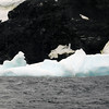 1298 - Detaille Island - 2011-02-21 - P1060988