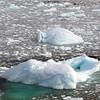 0408 - Neko Harbour - 2011-02-20 - P1050900