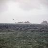 0240 - Half Moon Island - 2011-02-19 - P1050715
