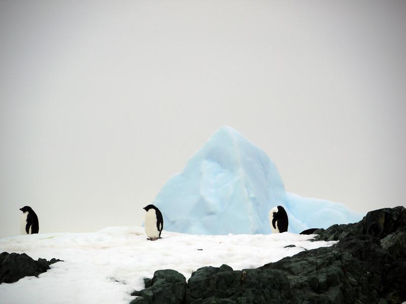 1312 - Detaille Island - 2011-02-21 - P1070014