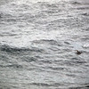0318 - At Sea - 2011-02-19 - P1050816