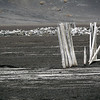 1594 - Deception Island - 2011-02-23 - P1070285