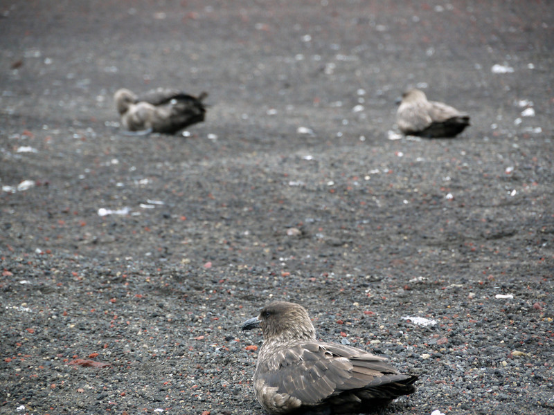 1585 - Deception Island - 2011-02-23 - P1070276