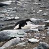 0280 - Half Moon Island - 2011-02-19 - P1050772