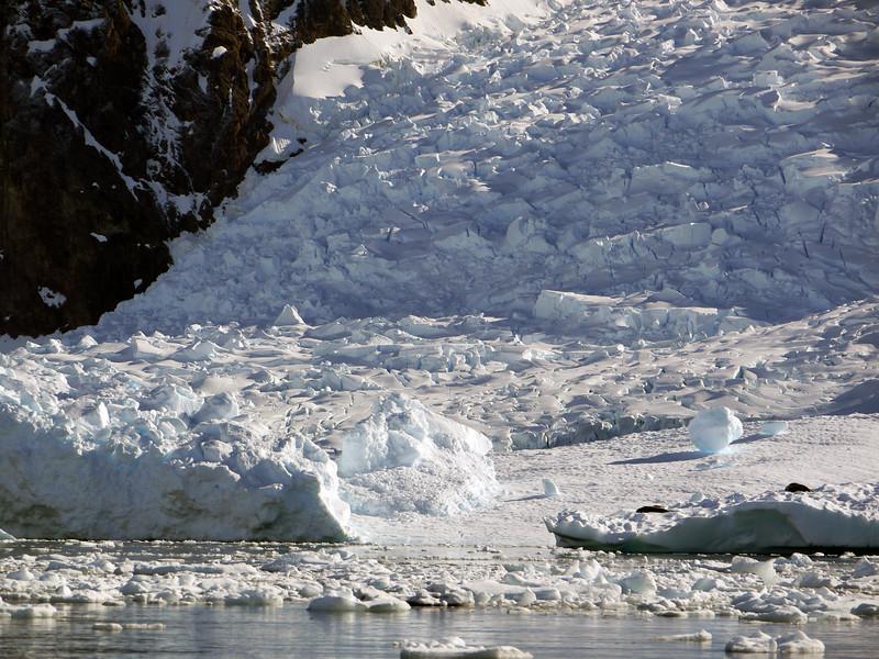 0433 - Neko Harbour - 2011-02-20 - P1050955