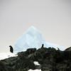 1308 - Detaille Island - 2011-02-21 - P1070003