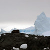 1327 - Detaille Island - 2011-02-21 - P1070049