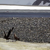 0173 - Half Moon Island - 2011-02-19 - P1050669
