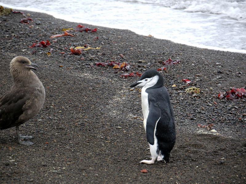 1621 - Deception Island - 2011-02-23 - P1070339