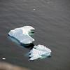 0456 - Neko Harbour - 2011-02-20 - P1060057