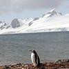 0222 - Half Moon Island - 2011-02-19 - P1050690