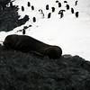 1296 - Detaille Island - 2011-02-21 - P1060985