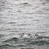 0319 - At Sea - 2011-02-19 - P1050819