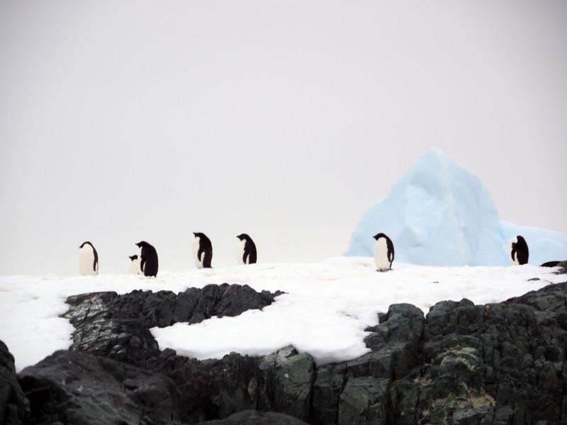 1313 - Detaille Island - 2011-02-21 - P1070018