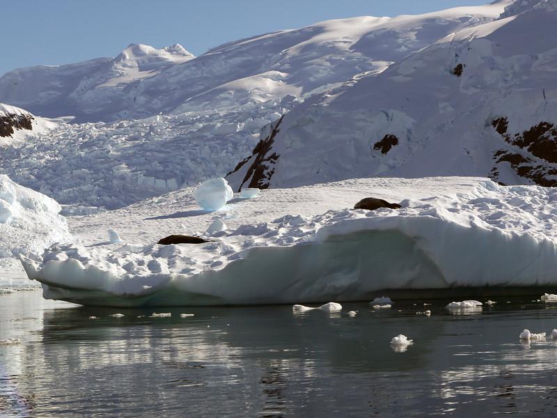 0435 - Neko Harbour - 2011-02-20 - P1050960