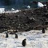 0478 - Neko Harbour - 2011-02-20 - P1060034