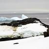 1273 - Detaille Island - 2011-02-21 - P1060961