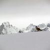 1236 - Detaille Island - 2011-02-21 - P1060844