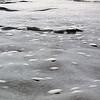 1286 - Detaille Island - 2011-02-21 - P1060970