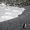 0284 - Half Moon Island - 2011-02-19 - P1050776