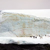 1323 - Detaille Island - 2011-02-21 - P1070043