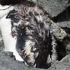 0200 - Half Moon Island - 2011-02-19 - P1010626
