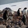 0653 - Cuverville Island - 2011-02-20 - P1060156