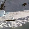 0440 - Neko Harbour - 2011-02-20 - P1050961