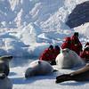 0399 - Neko Harbour - 2011-02-20 - P1050924