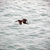 1560 - Deception Island - 2011-02-23 - P1070243