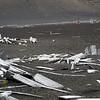 1602 - Deception Island - 2011-02-23 - P1070296
