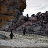 0247 - Half Moon Island - 2011-02-19 - P1050728